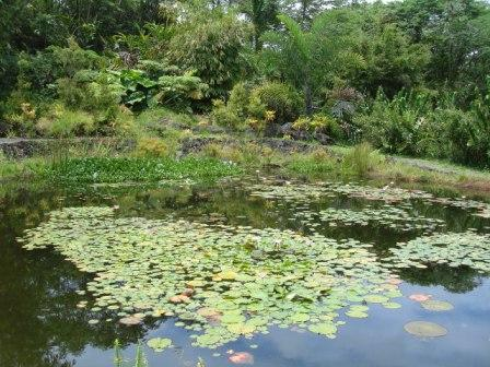 Hilo Zoo water pond