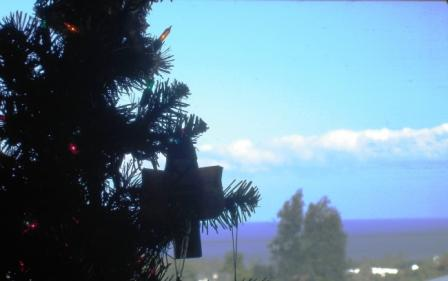 Christmas Tree Hilo Hawaii