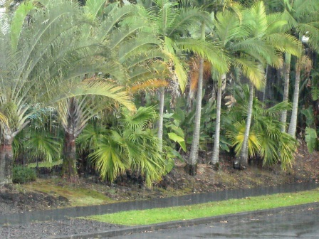 Hilo Rain in Feb